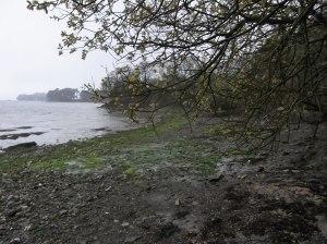 rivage en rade de Brest