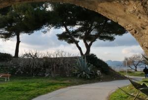 deux des arbres spécialement plantés dans le Parc de la Tour royale