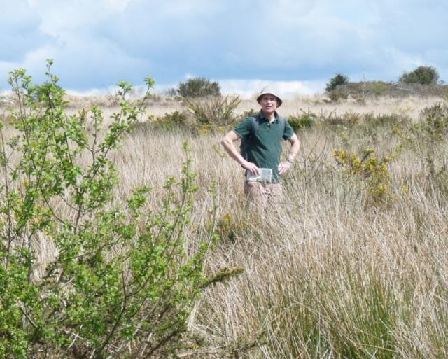 évolution dans les herbes hautes des tourbières