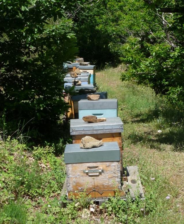 des ruches au coeur du massif des Maures