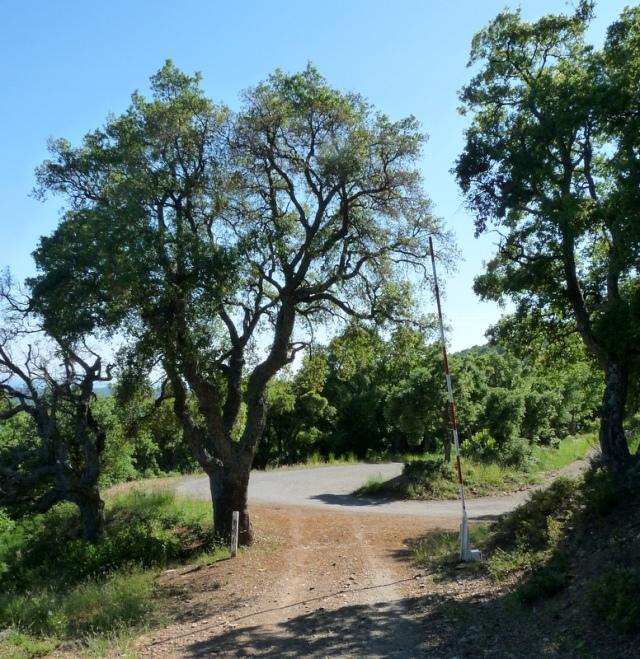 les arbres sur le chemin du retour sont grands