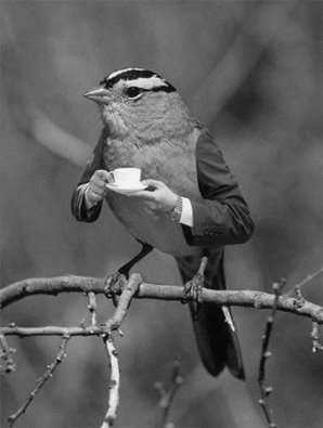 amateur de café