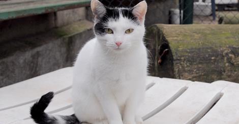 chat blanc et negro