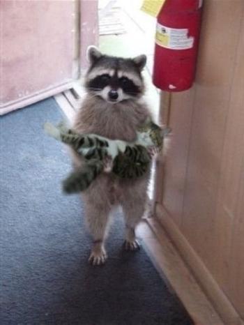 chat porté