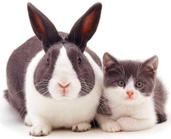 lapin & chat
